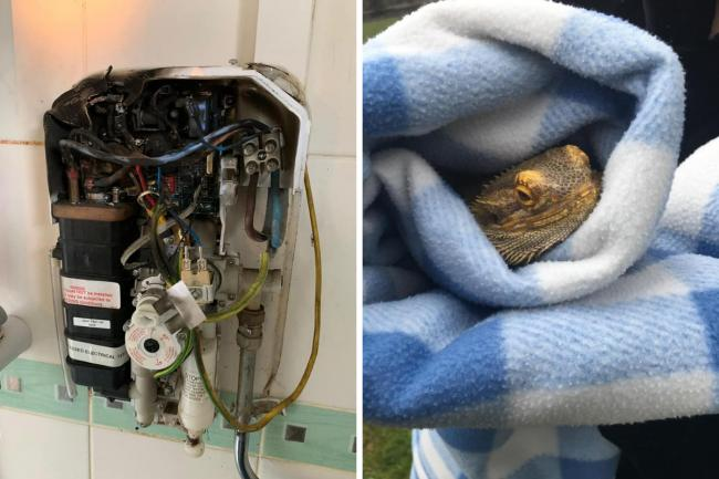 Fire from electric power shower and pet bearded dragon. Picture: Bicester Fire Station