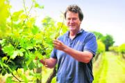Bob Nielsen among his vines at Brightwell Vineyard