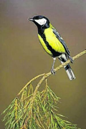 Help sought over infected wild birds