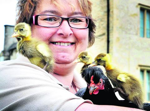 New arrivals create a flap at Cogges Farm Museum