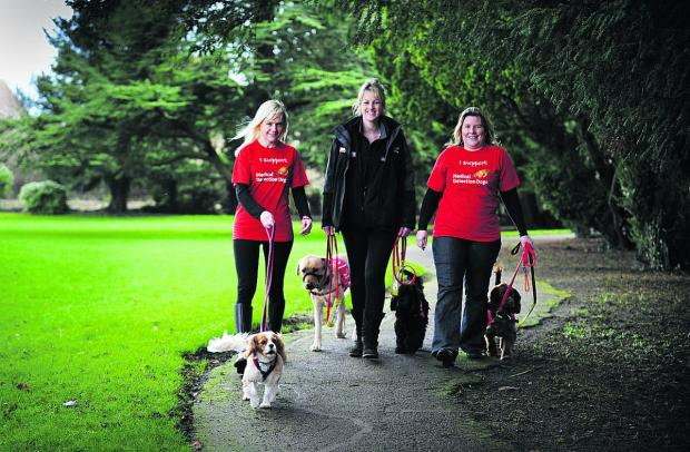 Melanie Magee, left, with her Cavalier King Charles spaniel Hazel, Sophie Lines, centre, from Medical Detection Dogs, with detection dogs Dan the Labrador and Hogan the cockerpoo, and Serena Courtney with cocker spaniel Molly. Picture: OX64664 Jon Lewis