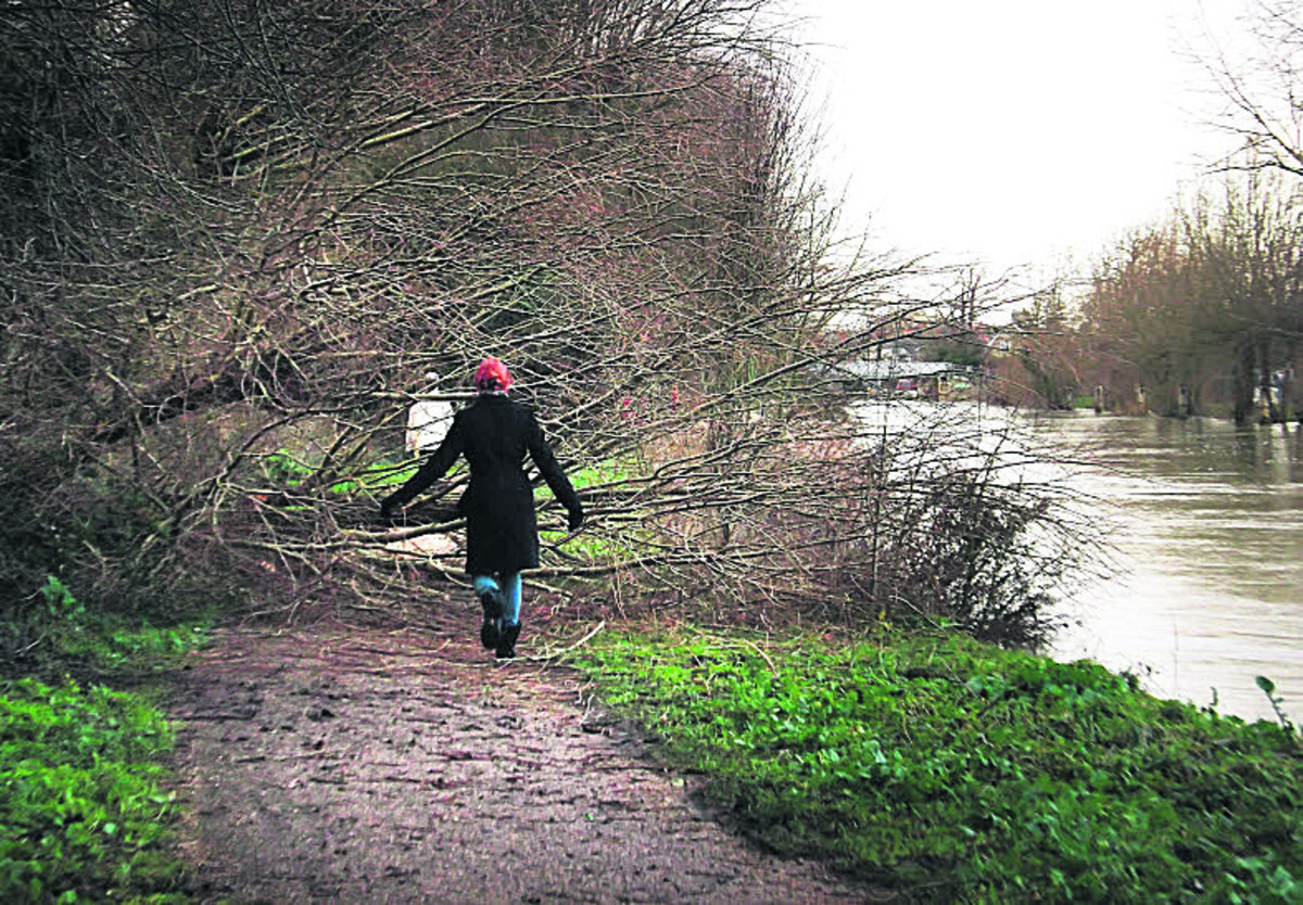 A fallen tree blocks the tow path of the Thames below Osney Lock towards Oxford yesterday following wet and stormy weather over the weekend