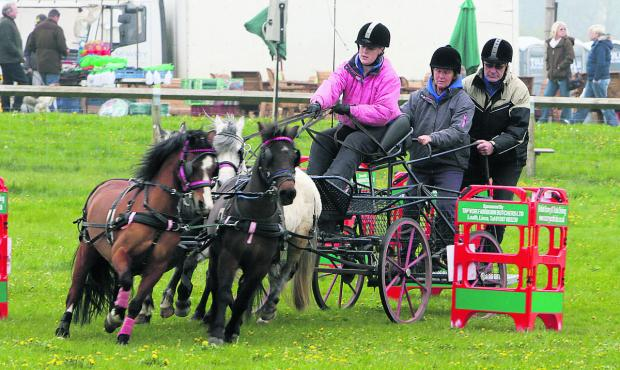 Bicester Advertiser: A driving team in action at the show.